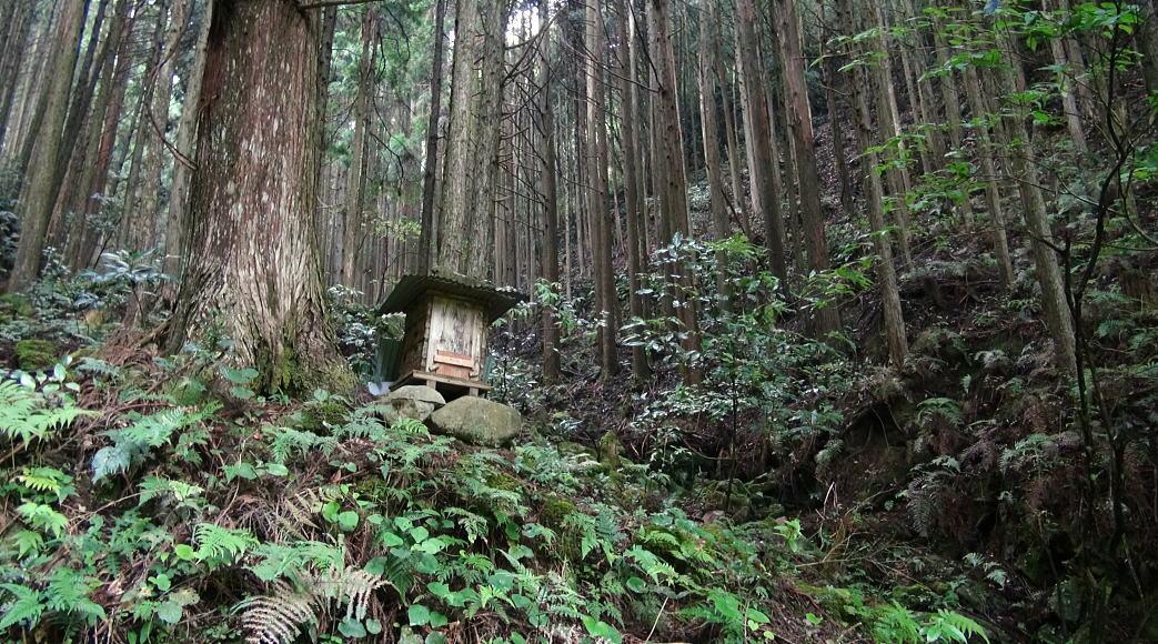 和歌山県東牟婁郡古座川町にある大変アクセスの良い11万坪の広大な山林。