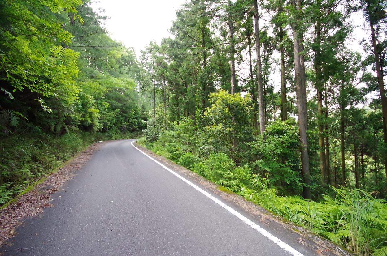 和歌山県東牟婁郡古座川町大桑にある実測1万4000坪の普通林です。