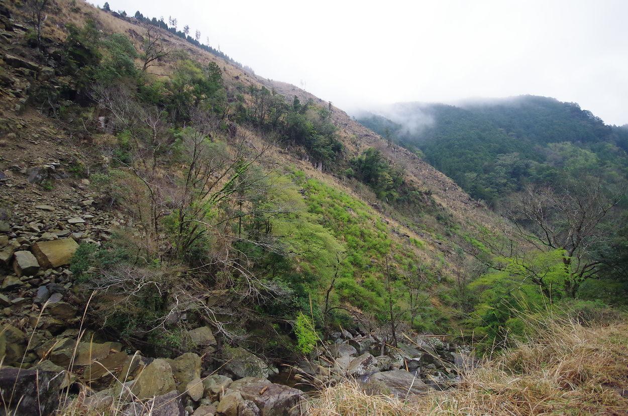 和歌山県新宮市熊野川町滝本にある10万坪の山林です。