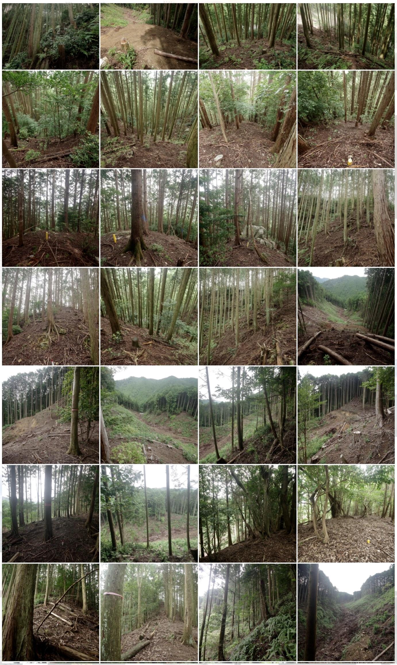 三重県松坂市にある参考実測8000坪の普通林です。