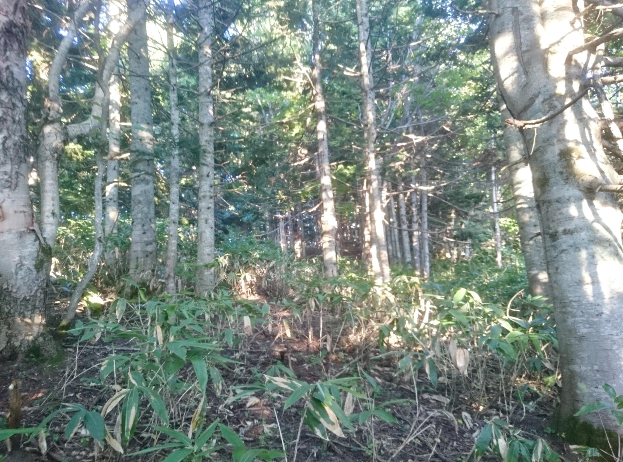 200万円  ニセコやルスツと隣接する北海道虻田郡喜茂別町字栄に所在する実測1万7500坪の普通林。