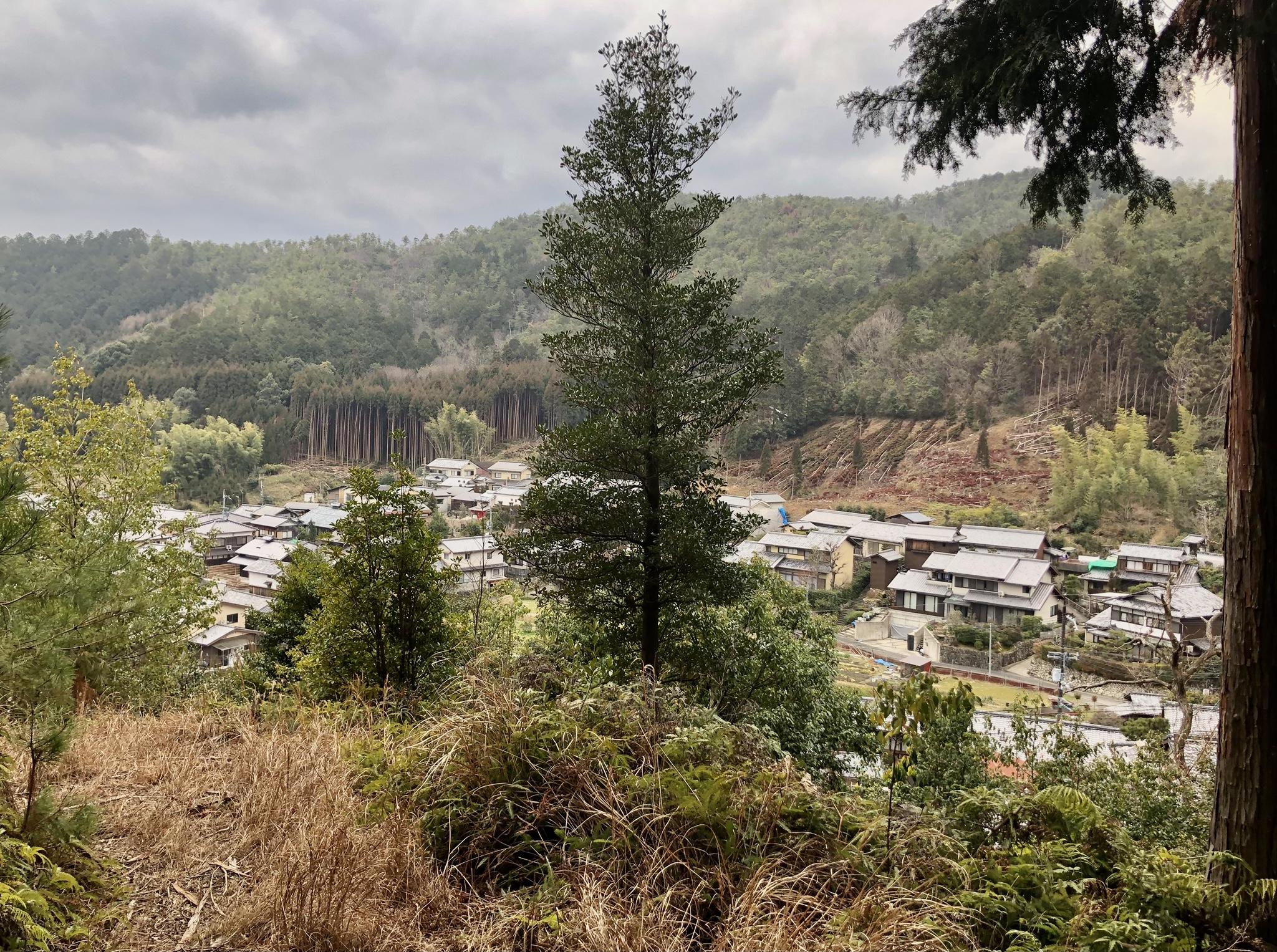 京都市右京区内で特にアクセスの良い2万9000坪の山林です。