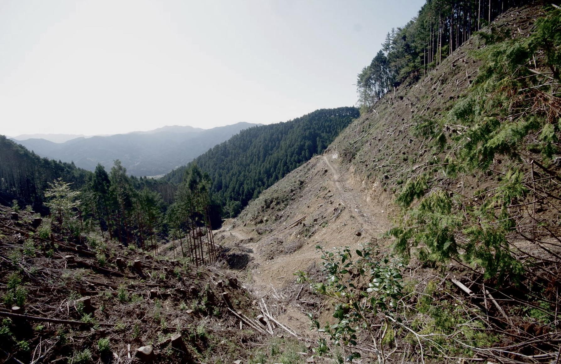 三重県津市美杉町にある実測1万8000坪の普通林です。