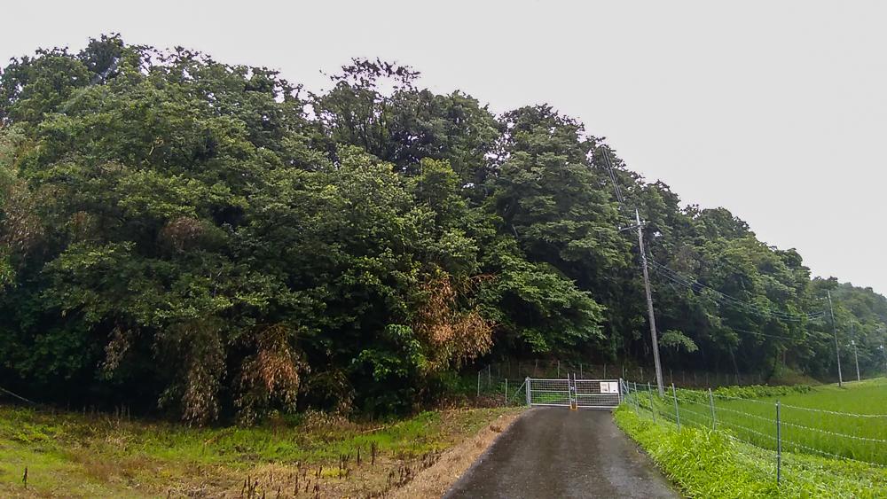 ①南東側の様子 奥の森全体が本物件