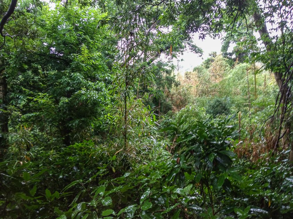 ⑯土地内の笹薮繁茂の様子