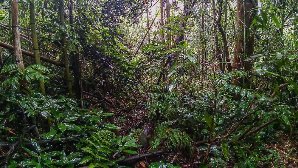 ㉑山深いジャングルの雰囲気