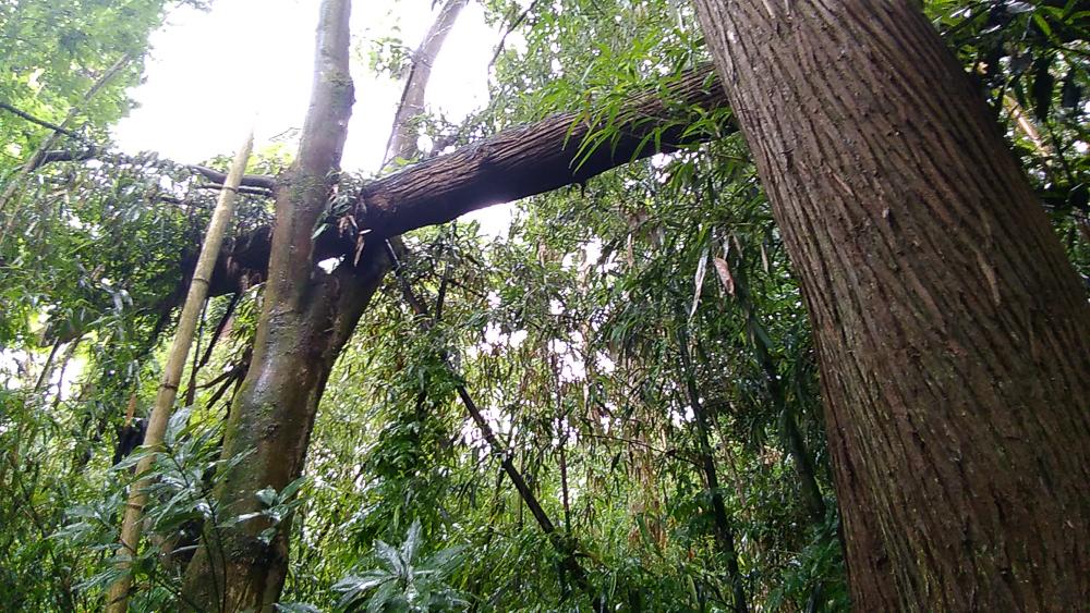 ㉒倒木の様子