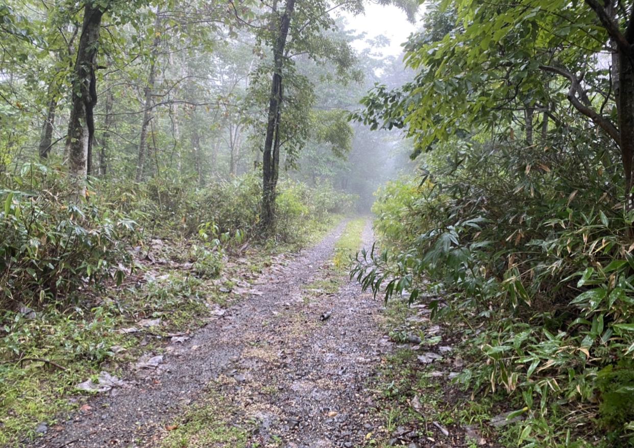 北海道 新登別温泉にある4万2000坪の普通林(緩やかな山林です)